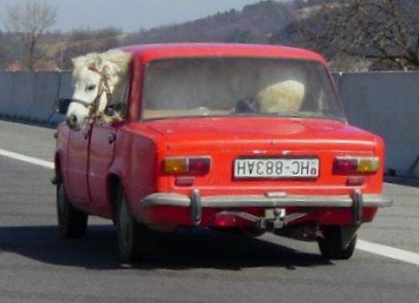 Car_-_Transport_Horse